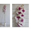 orchidea virág, mint egy természetes szár (