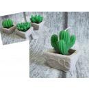 Bougie décorative cactus, succulente dans un pot 5