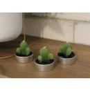 Díszítő gyertyák kaktuszok, zamatok egy sor 3