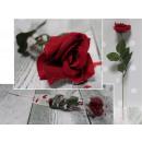 Valentin rózsa kibontakozott egy 40 c-es dobozos k