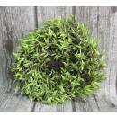 nagyker Egyéb: A zöld, hosszúkás levelek koszümszele 30 cm