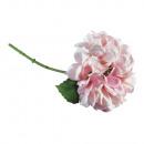 Hydrangea, rose,