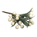 Mistletoe, light green,