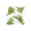 Napkin garden herbs, FSC Mix Credit, 20 pieces