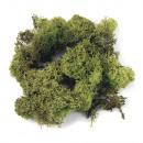 Iceland moss, light green, 30 g