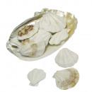 Shell clams,