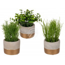Decorative herbs in gray / gold cement pot