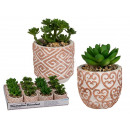 Decorative succulents in a ceramic pot, approx. 7