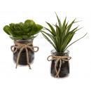 grossiste Fleurs artificielles: succulentes  décoratifs en  verre, ...