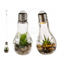 Decorative succulents in glass light bulb for hang