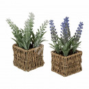 Deco lavender in seagrass pot about 19 cm, 2 times
