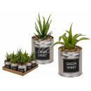 Deco succulent, in a metal pot, Green Spirit