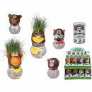 Pet grass head in PVC box, 5-assorted, 16 Fwd