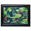 3D image Butterflies about 25 x 35 cm
