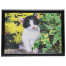 3D picture cat about 40 x 60 cm