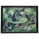 3D picture butterflies about 40 x 60 cm