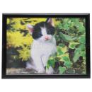 3D Bild Katze ca. 50 x 70 cm