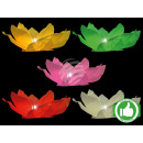 Starter pack water lanterns assorted