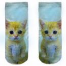 Motive socks white cat kitten