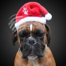 Cappello da Babbo Natale ideale per coccole &