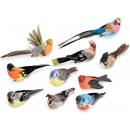 ingrosso Accessori e ricambi: Grossista uccellini decorativi piume ...
