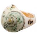 Gesorteerde Shell Ring groene torenromp maten