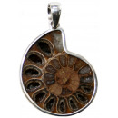 wholesale Pendant: Sterling silver, fossil ammonite, L. 40 mm