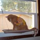 wholesale Pet supplies: ZW2 Cat Bed GLASS IN PLAYPEN