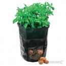 Sacchetto per patate in crescita