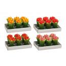 Teelicht set 6 pezzi, tulipano, 4- assortito, B4