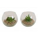 Aloe Vera, vetro plastica 2 volte assortito ,
