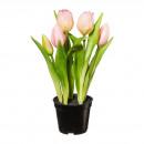 Tulipani in vaso x5 25cm plastica rosa / rosa
