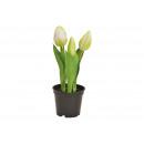 Tulipani in vaso x3 in plastica bianca (H) 20,5 cm
