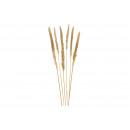 wholesale Artificial Flowers: Pampas grass beige set of 6, 75cm