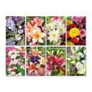 Großhandel Glückwunschkarten: Geburstagskarte mit bunten Blumen