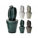 Cactus en una maceta 12.5 cm, 4 veces surtido ,