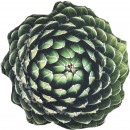 wholesale Cushions & Blankets: Pillows SUCCULENT 60X60