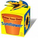 Großhandel Pflanzen & Töpfe: Sunny Sonnenblume - Verkauf