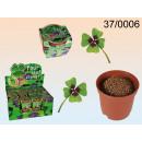 wholesale Plants & Pots:Four Leaf Clover