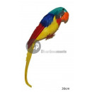 parrot with feathers