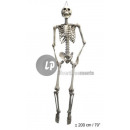 skeleton hanging 2m nvt