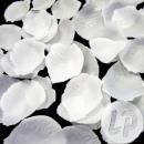groothandel Home & Living: veel met 500 witte rozen bloemblaadjes