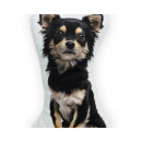 Longhaired Chihuahua Black 25 x 25 Black