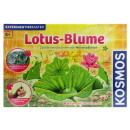 wholesale Experimentation & Research: KOSMOS Lotus  Flower Experiment box in Bx ca 33x22