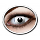 wholesale Reading Glasses: Contact lenses 3 monthly lenses in box ca 8x4,5