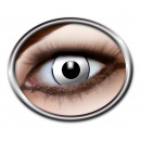 Kontaktlinsen 3 Monatslinsen in Schachtel ca 8x4,5