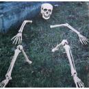 groothandel Home & Living: Skeletal  onderdelen voor gazon decoratie