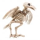 Scheletro di corvo della decorazione (18 cm)