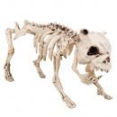 Scheletro di cane decorativo (42 cm)