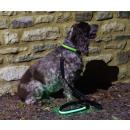 IA LED Light Up Pet Leads - Hundeleine - Grün